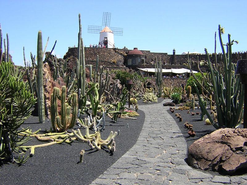 Jard n de cactus for Jardines con cactus