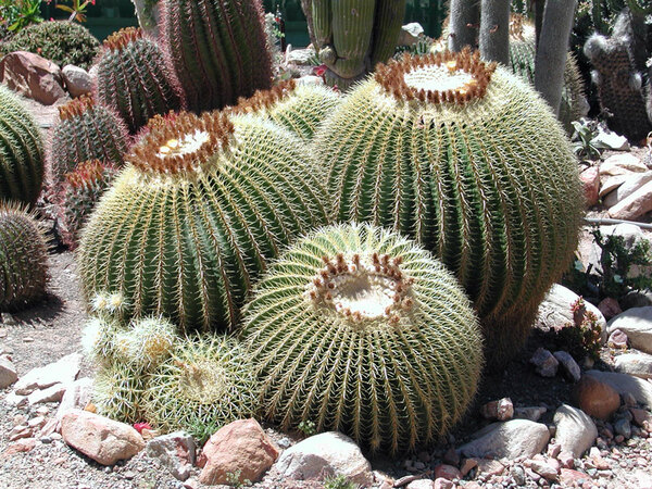 Sheilam Cactus Garden, Western Cape