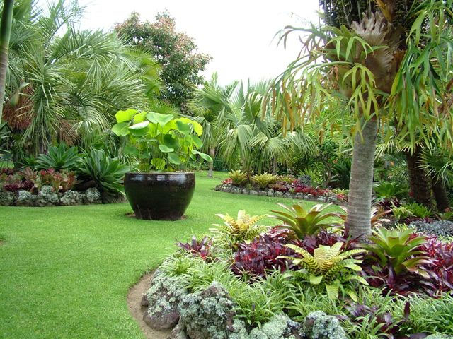 Totara waters subtropical garden for Arboles con flores para jardin