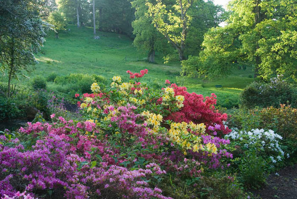 Minterne Gardens, Dorset
