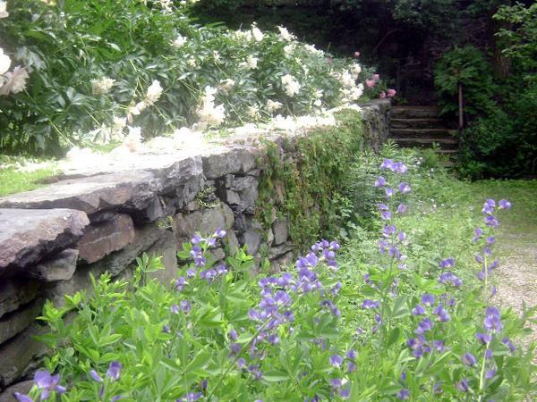 Shakespeare's Head Garden, Rhode Island