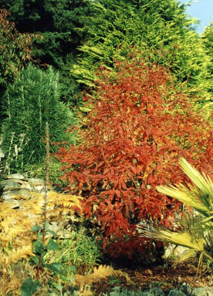 Abriachan Garden, Autumn