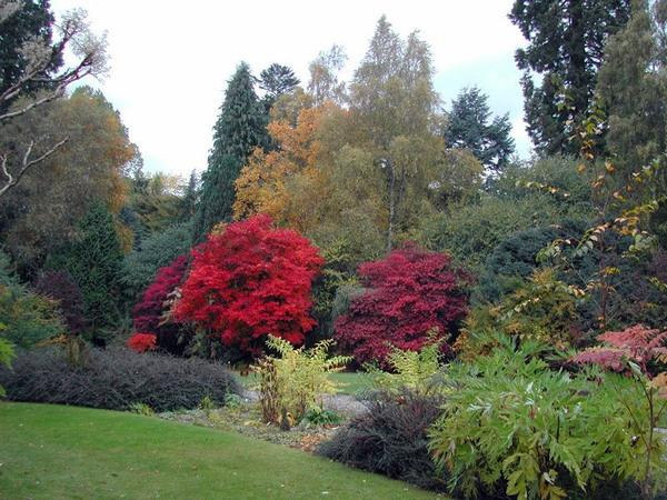 Cluny House Garden