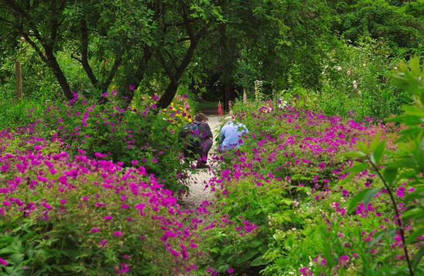 Achamore Gardens, Gigha