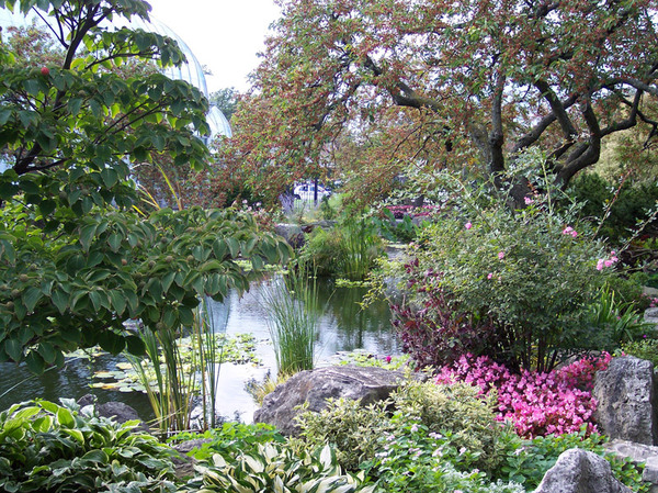 Lily Pond, Whitcomb Conservatory Garden