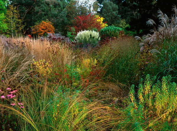 Knoll gardens and nursery for Large grasses for gardens