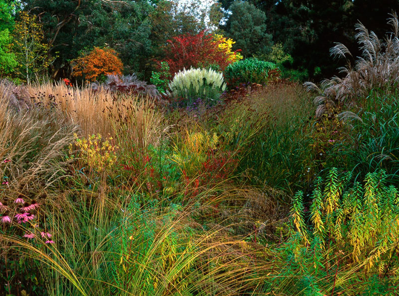 Knoll gardens and nursery for Wild grass gardens