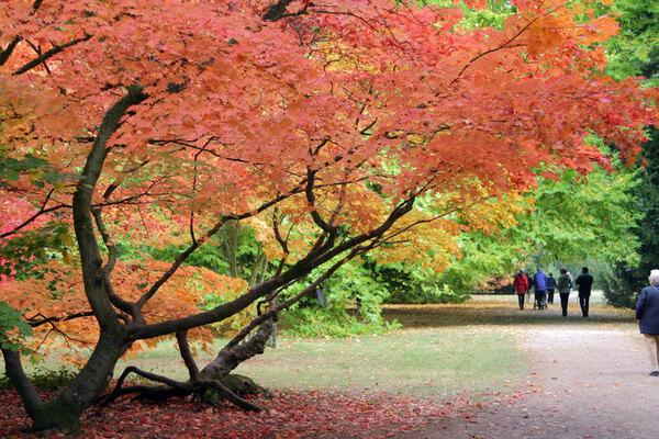 Autumn, Westonbirt Arboretum