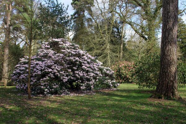 March, Westonbirt Arboretum