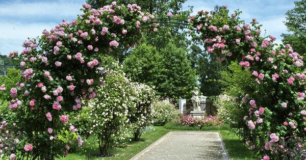 Rose Arch, Schloss Eggenberg