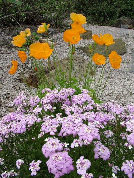 Treborth Botanic Garden, Wales