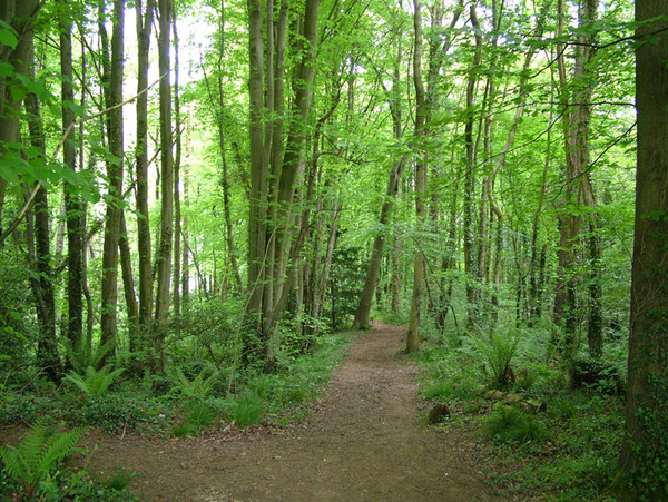 Woodland, Treborth Botanic Garden