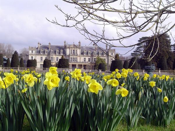 Daffodils, Dyffryn Botanic Garden