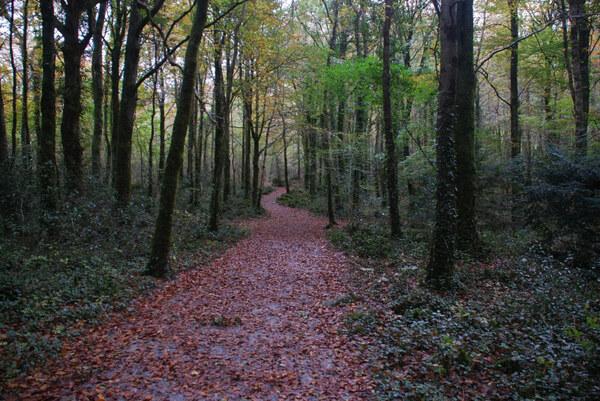 Coole Park, Ireland