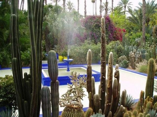 Cacti, Jardin Majorelle