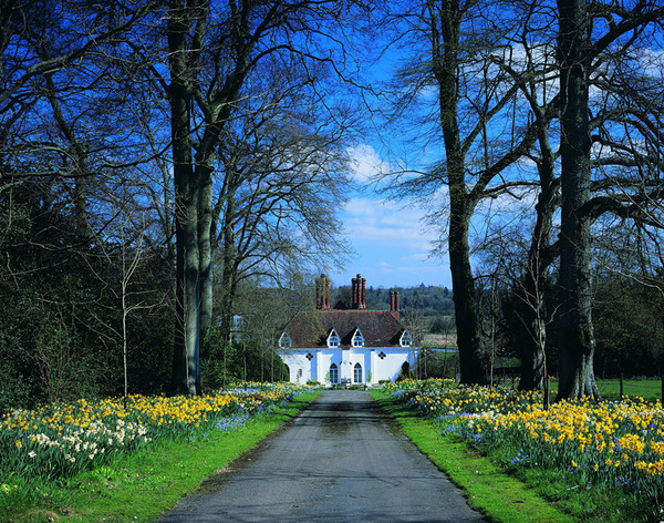 Daffodils, Houghton Lodge Garden