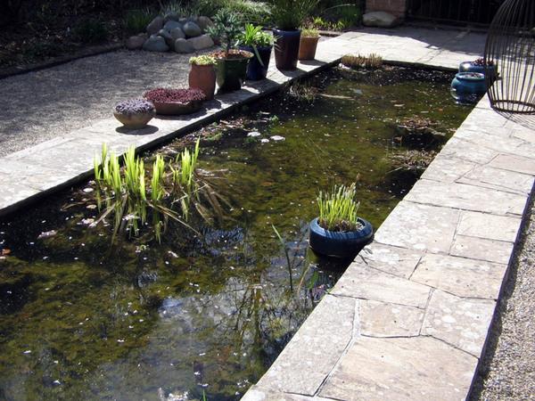Pond, Cloudehill Gardens