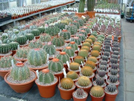 Croston Cactus Nursery