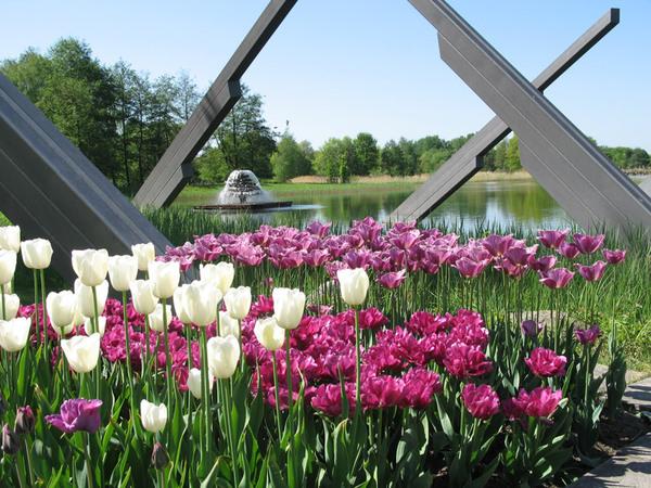 Tulips, Britzer Garten