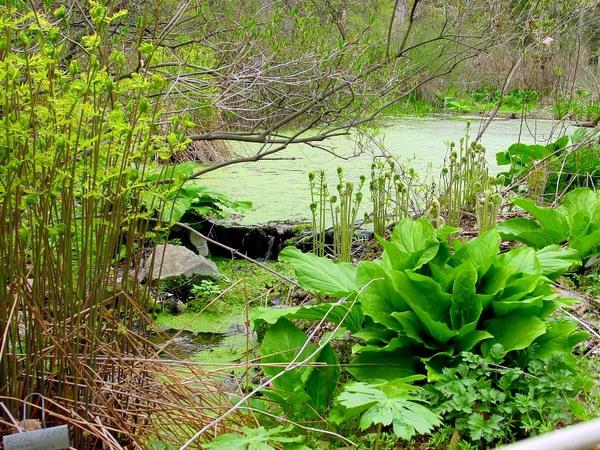Bowman's Hill Wildflower Preserve, Pennsylvania