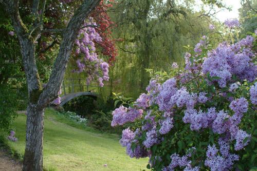 Cambo Gardens, Scotland