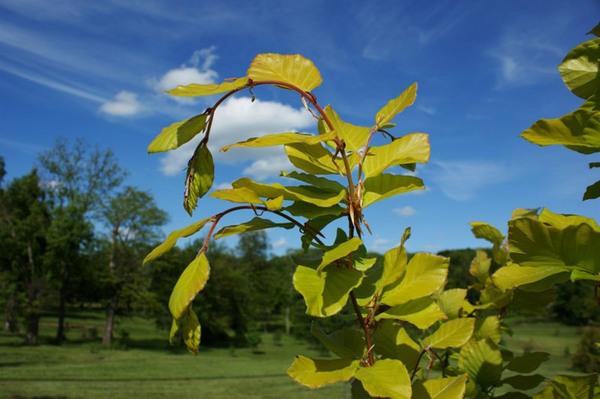 Dawes Arboretum, Newark