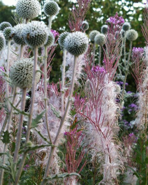 Shipley  Gardens, Herefordshire