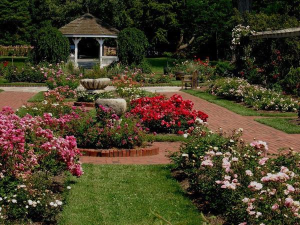 Roses, Colonial Park Gardens