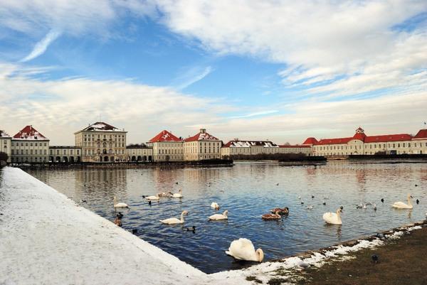 Swans, Nymphenburg Schlosspark
