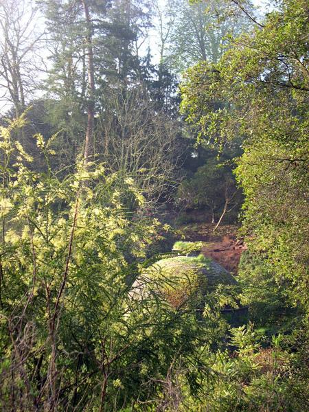 Dovecote, Cotehele Garden