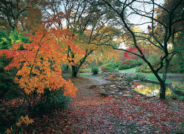 Autumn, Exbury Gardens