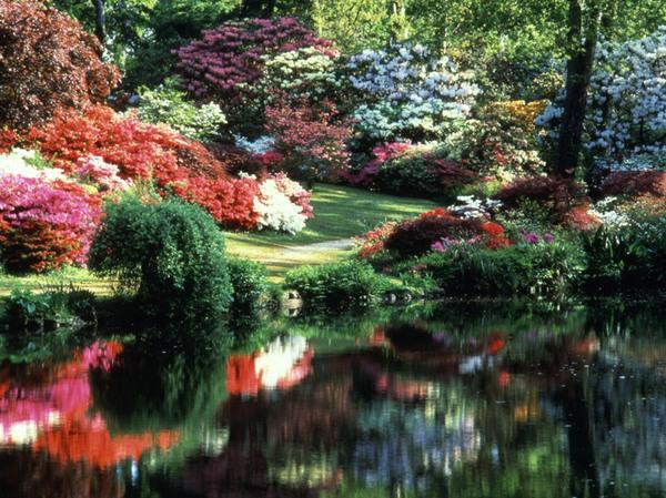 Azaleas, Exbury Gardens