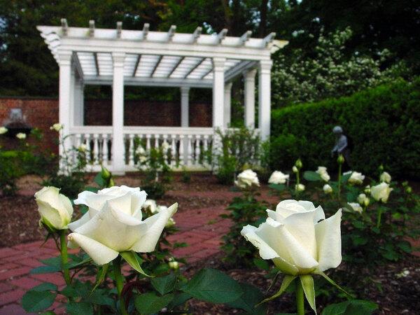 Roses, Frelinghuysen Arboretum