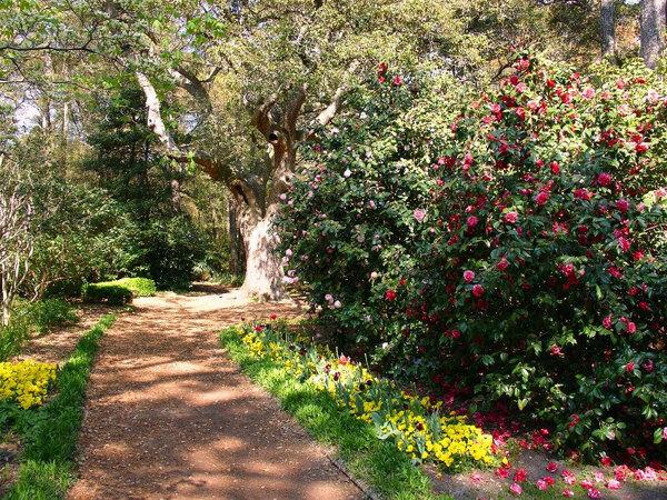 Path, Elizabethan Gardens