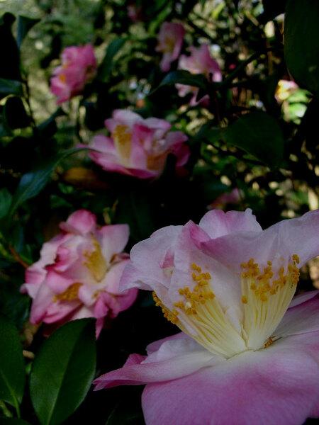 Elizabethan Gardens, USA