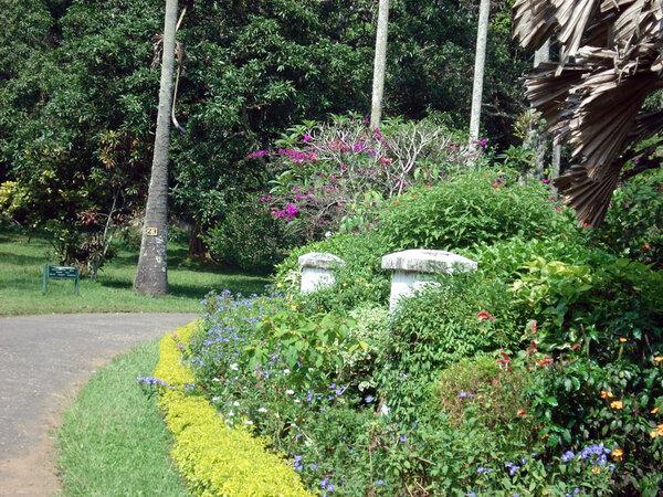 Peradeniya Botanic Gardens, Kandy