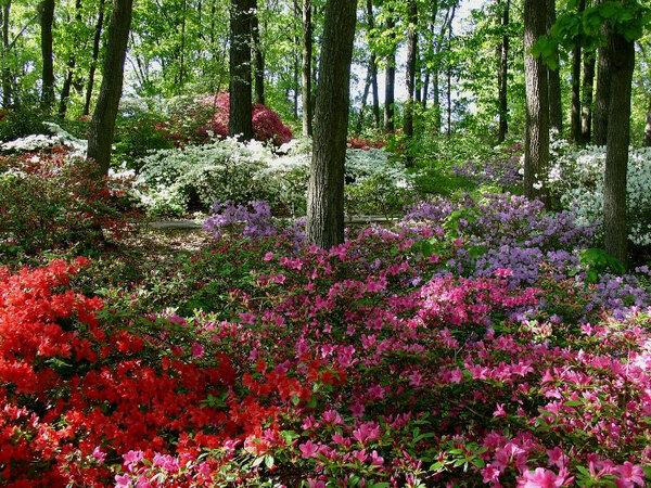 Jenkins Arboretum, Pennsylvania