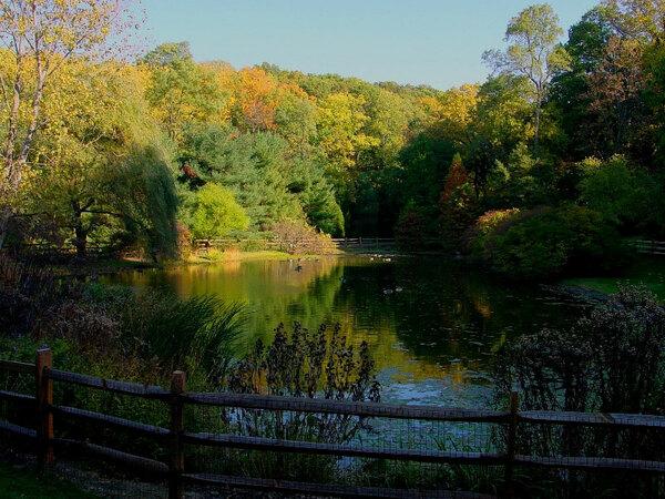 Pond, Jenkins Arboretum
