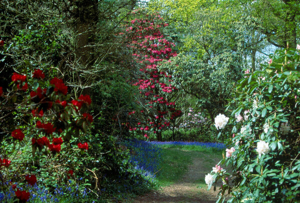 Warren Wood, Borde Hill Garden