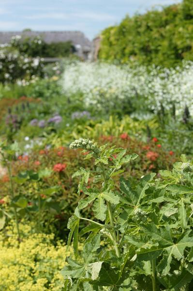 Lamport Hall Garden