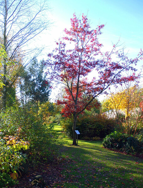 Bluebell Arboretum and Nursery, Autumn