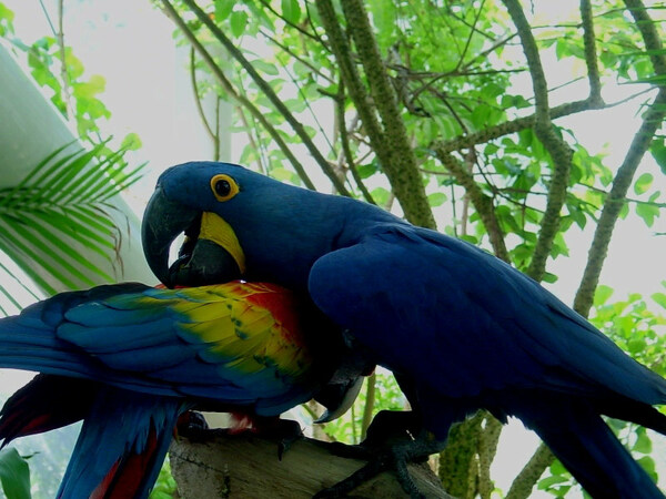 Parrots, Moody Gardens