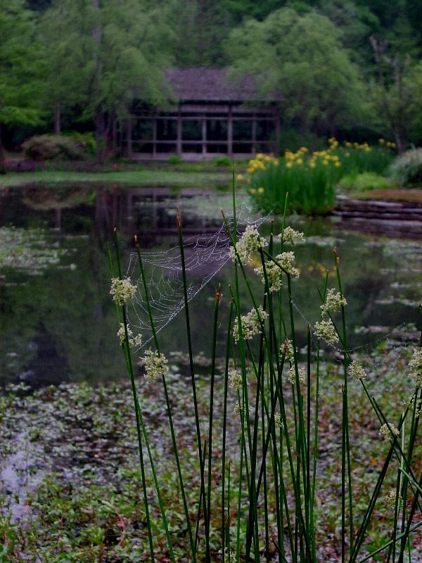 Pond, Mercer Arboretum