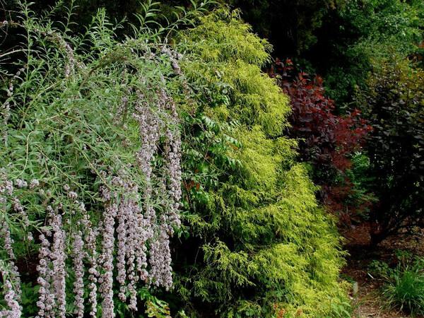 Green Spring Gardens, Virginia