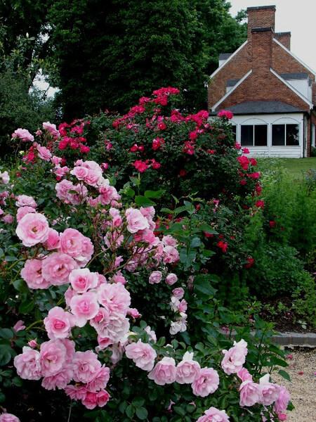 Roses, Green Spring Gardens