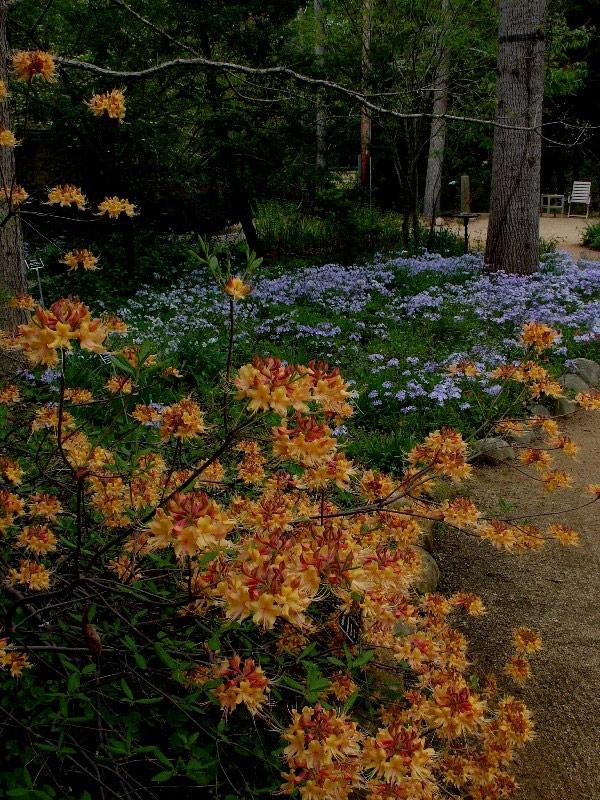 North Carolina Botanical Garden, USA