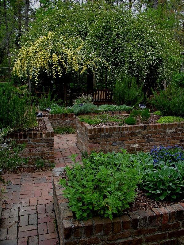 Unc Botanical Gardens