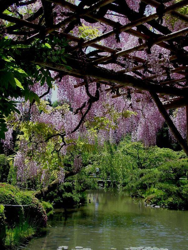 Washington Park Arboretum And Japanese Garden