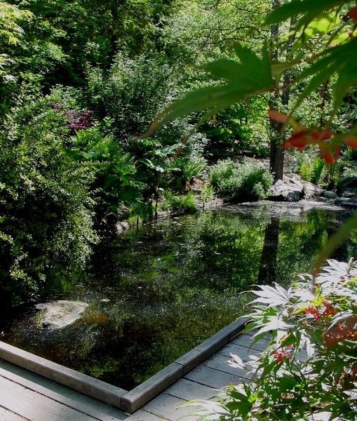 Pool, Washington Park Arboretum