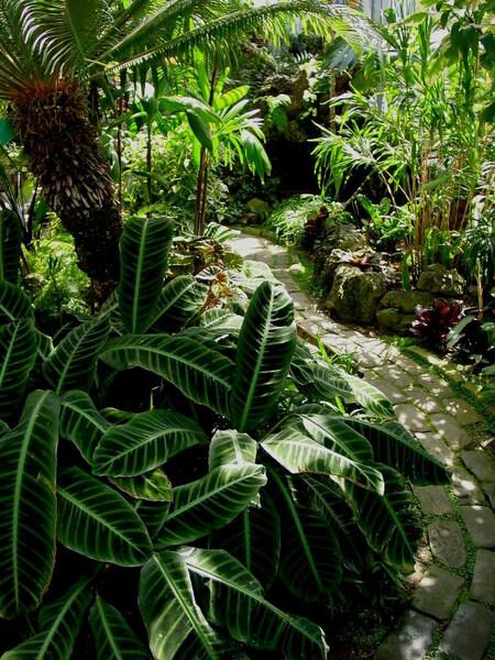 Seymour Botanical Conservatory